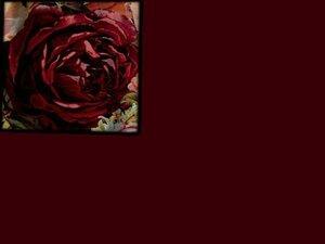 Компаньоны к футеру с лайкрой БОРДОВЫЕ РОЗЫ: Футер цв. БОРДО, 95/5 Пенье,пл 240 шир 180 Цена  предзаказа 430,00 р/м Рибана БОРДО, ширина 150см или180см., цена 350,00
