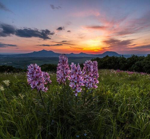 На закате, у цветов, в горах