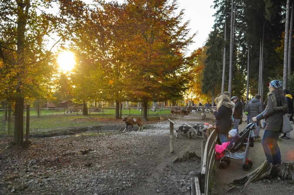 Tierpark-(7).jpg