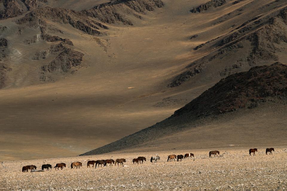 Сезонный перегон скота монгольских кочевников