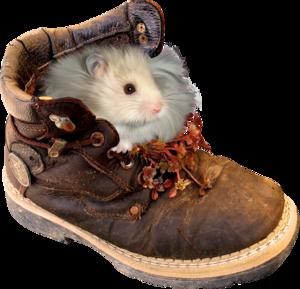 хомяк в ботинке