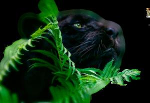 пантеры
