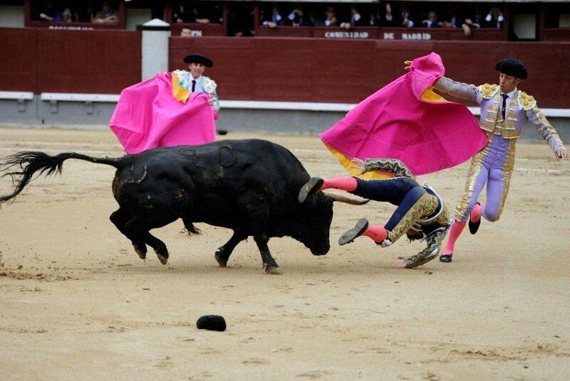 В Испании впервые за 35 лет прекратили бой быков   коррида запрещена