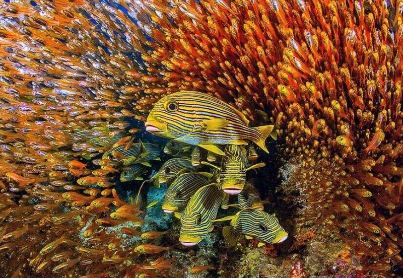 Золотая черепаха! Лучшие фотографии фестиваля дикой природы России