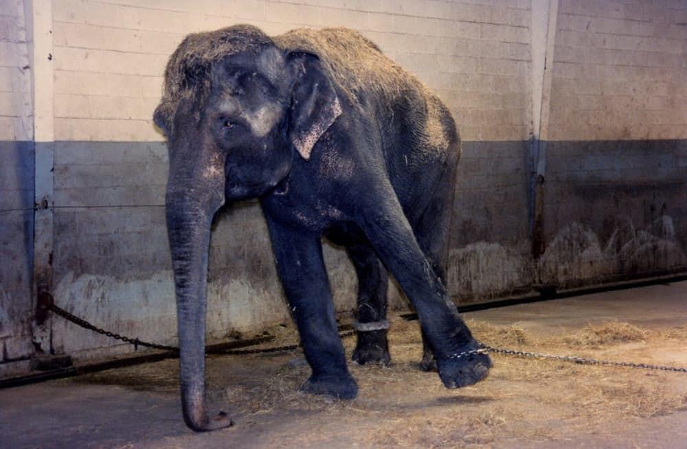 12. Собак держат в клетках 23 часа в сутки В цирках страдают не только дикие животные. Собак часто б