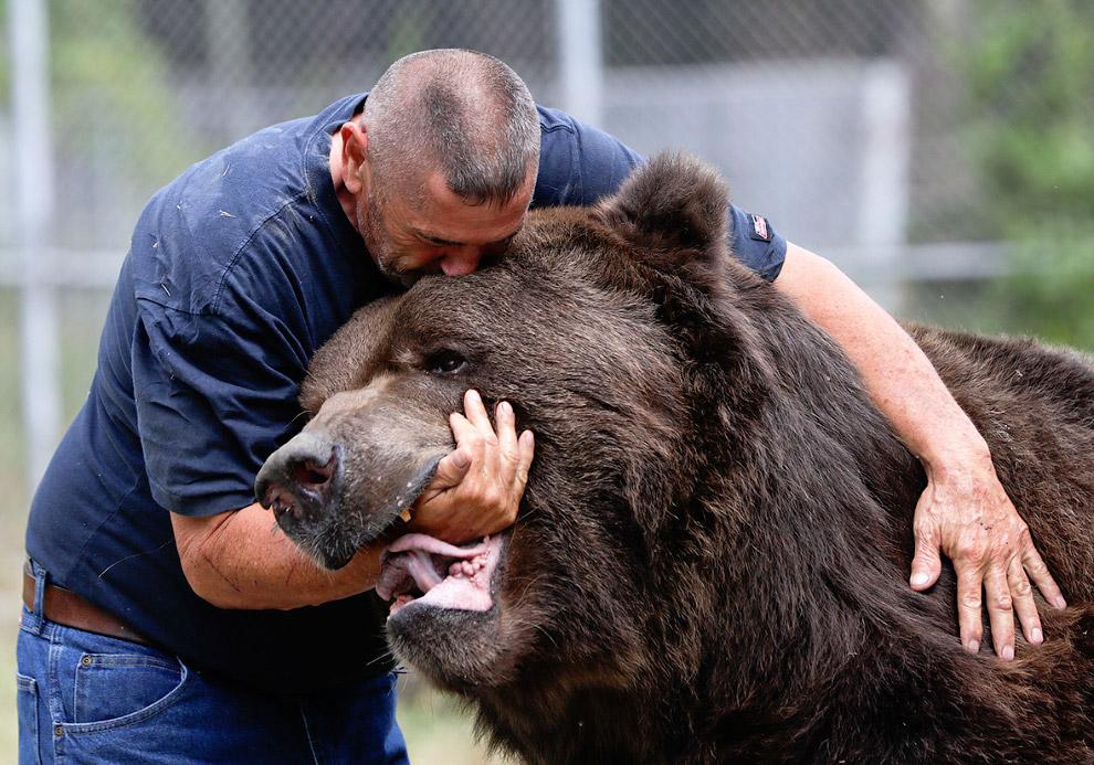 Всего в центре живут 11 медведей. Еще здесь есть белки, утки, олени, норки и другие животные, к