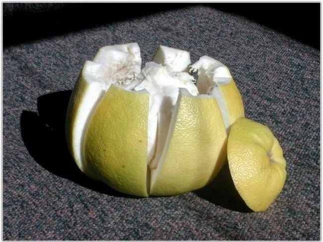 7. Помело обладает сильными мочегонными свойствами и в этом отношении может даже посоперничать с арб