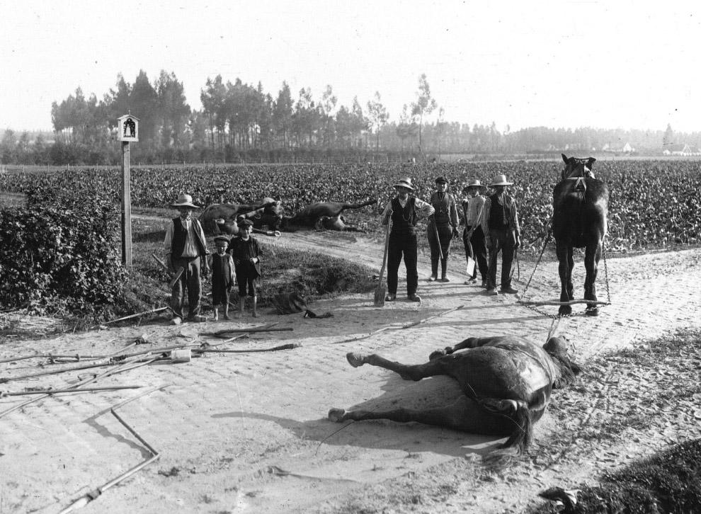 Собака, обученная разыскивать раненых солдат, 1915 год. (Фото Bibliotheue nationale de France):