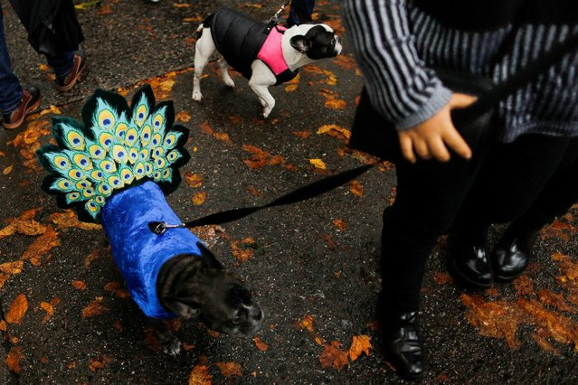 Dogs take part in the annual halloween dog parade at Manhattan's Tompkins Square Park in New York, U