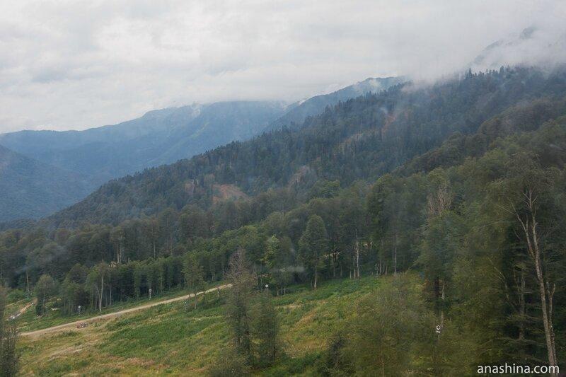 Заповедный лес, Красная Поляна, Роза Хутор