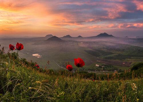 Вечер, цветы, среди гор