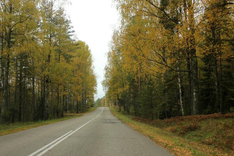 Дорога свозь жёлтые деревья. Ищем Посинь