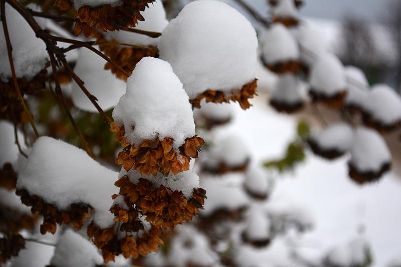 цветы в снегу 18.jpg