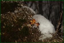 http://img-fotki.yandex.ru/get/196997/15842935.434/0_f2dac_c759897c_orig.jpg