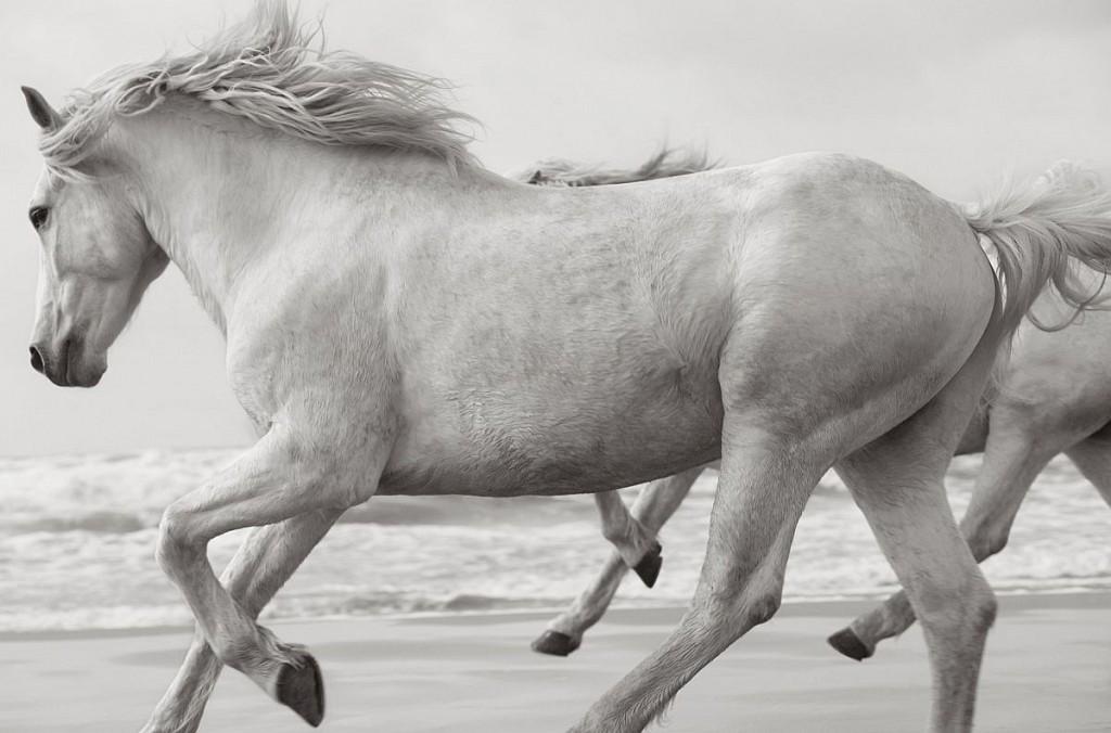Белые лошади Дрю Доггетта / Drew Doggett