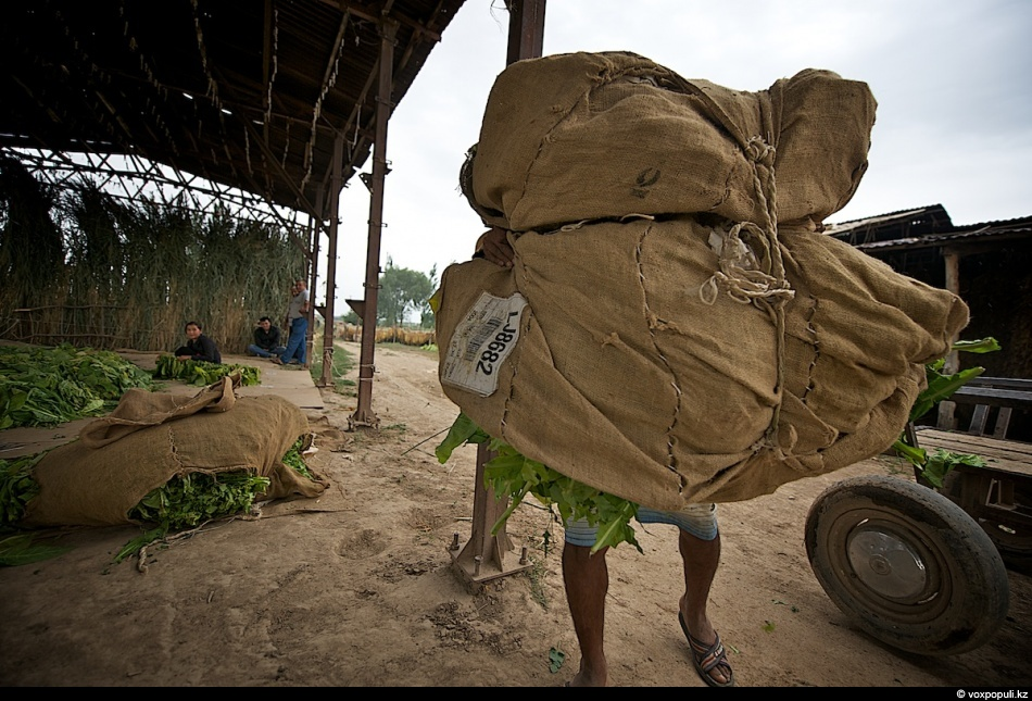 7. Один мешок листьев весит 30-45 кг