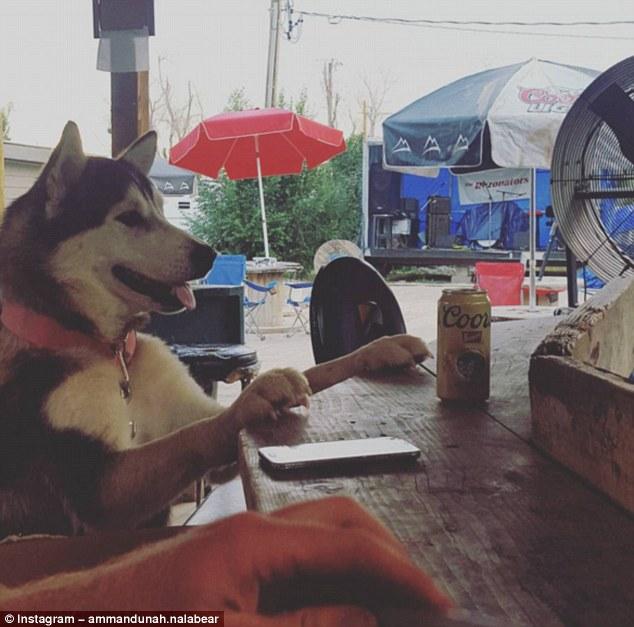 Собаки, которые провели лето лучше, чем многие из нас