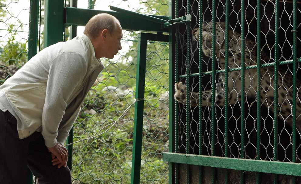 9. Путин и леопард. Президент у клетки леопарда в заповеднике Сочи. (Alexei Druzhinin/AFP/Getty Imag