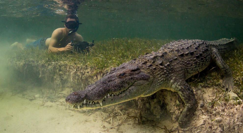 5. Сложно сказать, насколько крокодил принимал человека в таком костюме за «своего». (Фото Mark