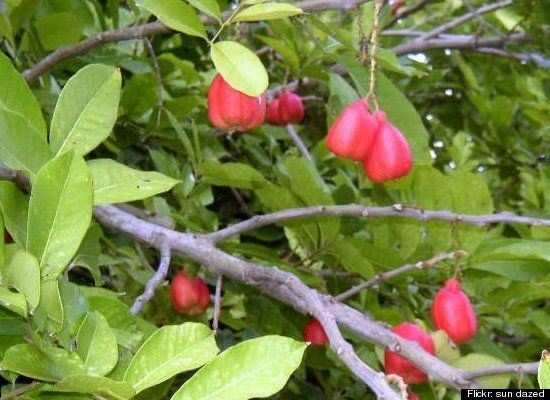 Дуриан: По отзывам, этот юго-восточный азиатский фрукт может быть смертельным в сочетании с алк