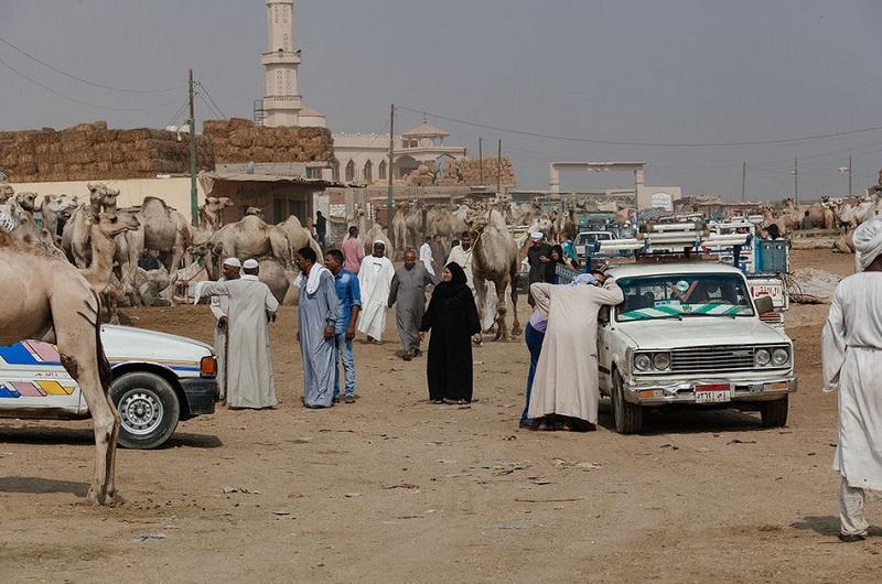 Ужасы самого большого рынка верблюдов в Африке... На это просто невыносимо смотреть!