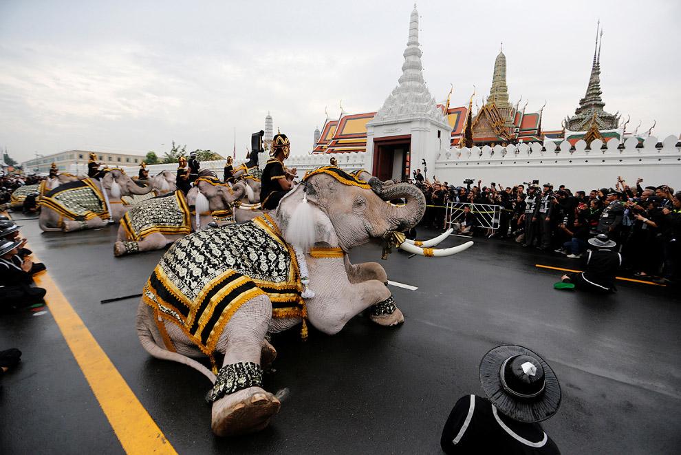 Бангкок, Таиланд, ноябрь 2016 года.