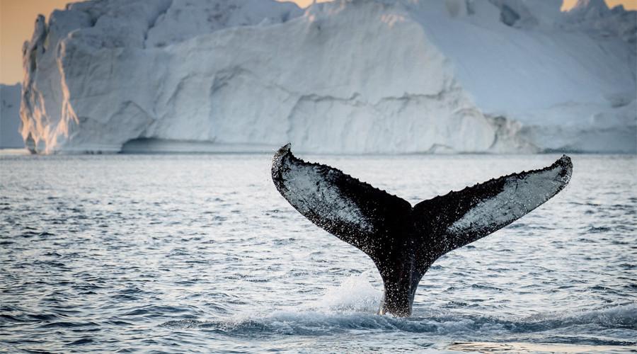 10. Гренландия По сегодняшний день открываются все новые, ранее неизведанные части Гренландии. Больш