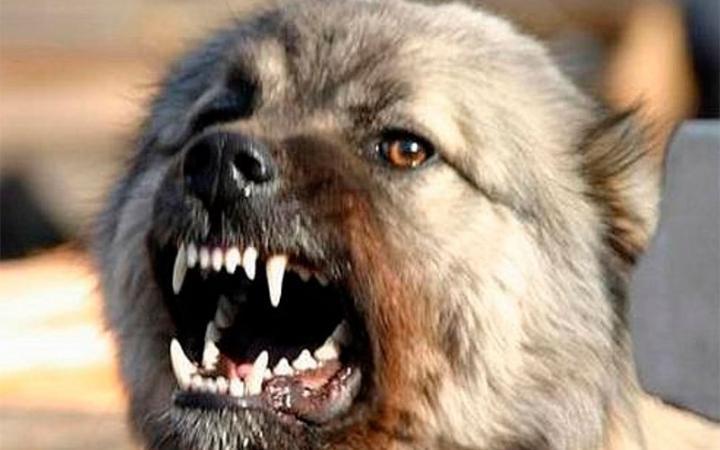 Стая бродячих собак напала наребенка наКамчатке