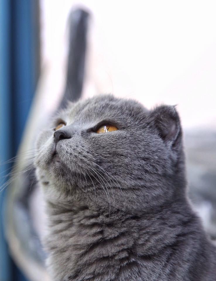 Украинские котики