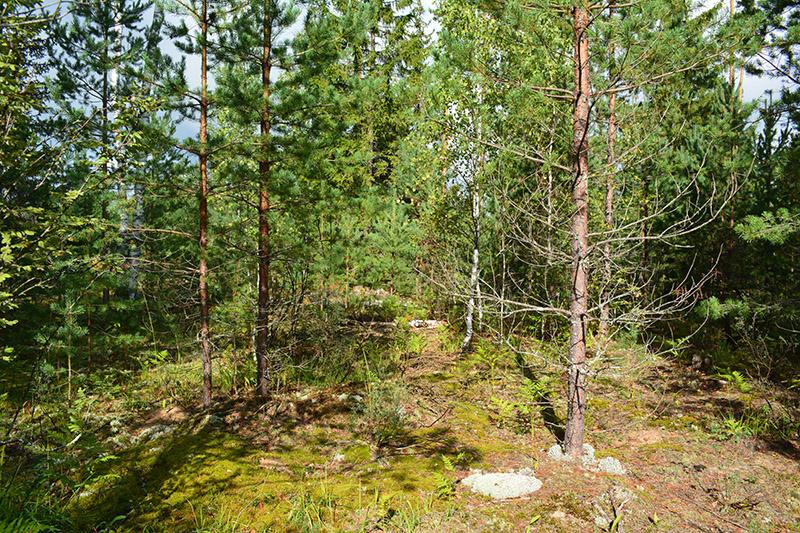 солнечный  лес 16 2.jpg