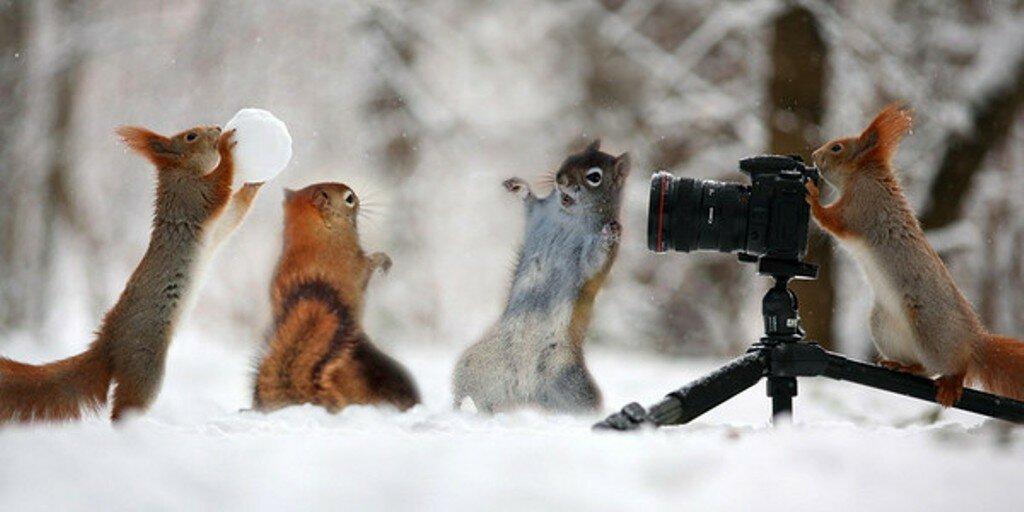 зима-животные-белки.jpg
