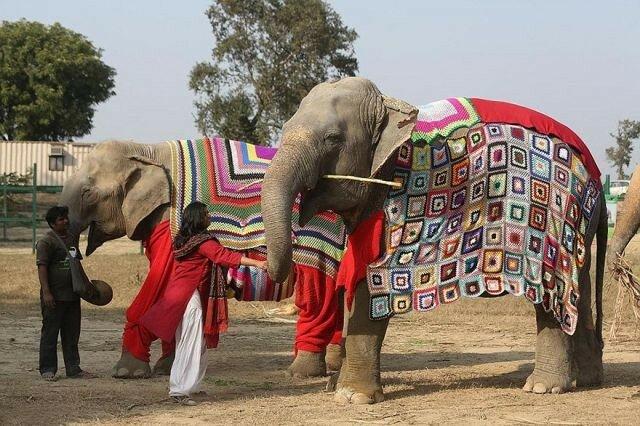 пижама слону.jpg