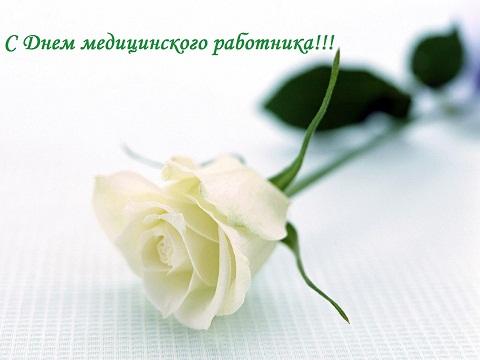 С днем акушера, медицинского работника! Поздравляем! Белая роза