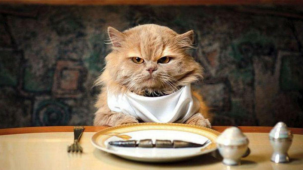 6. Кошка ест меньше.