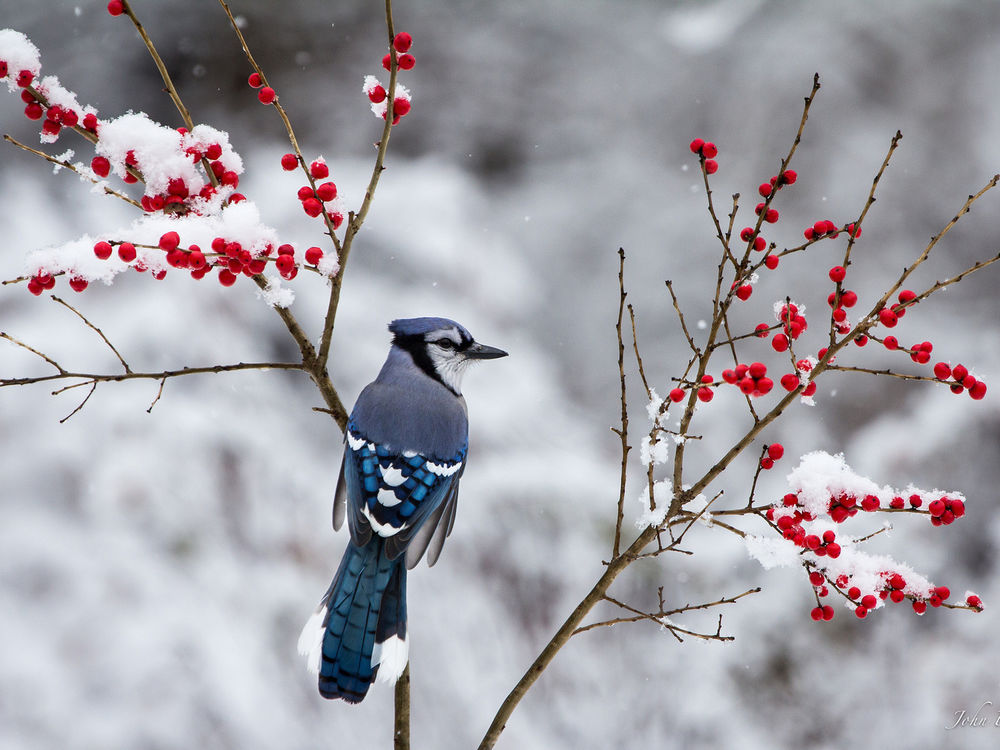 Каждую зиму жизнь сотен, если не тысяч птичек обрывается при столкновении со стеной. Дело в том, что