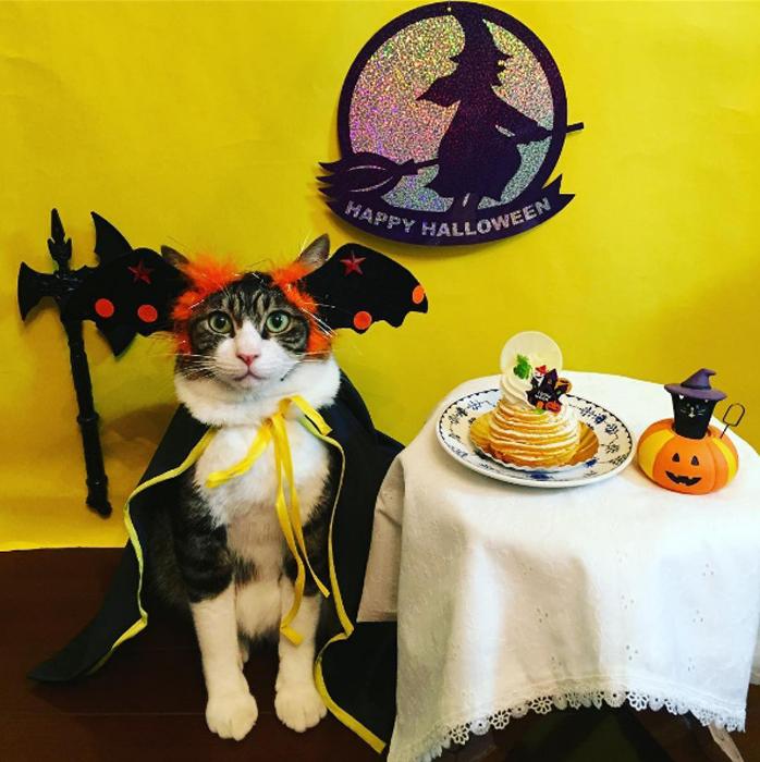 С помощью своего Инстаграма rinne172 также знакомит зрителей с японской едой, усаживая своего кота з
