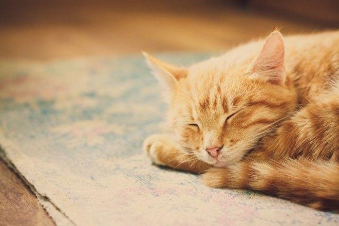 2. Ты всегда будешь иметь надежную поддержку. В трудное время кошки помогут перенести сильные тяжелы