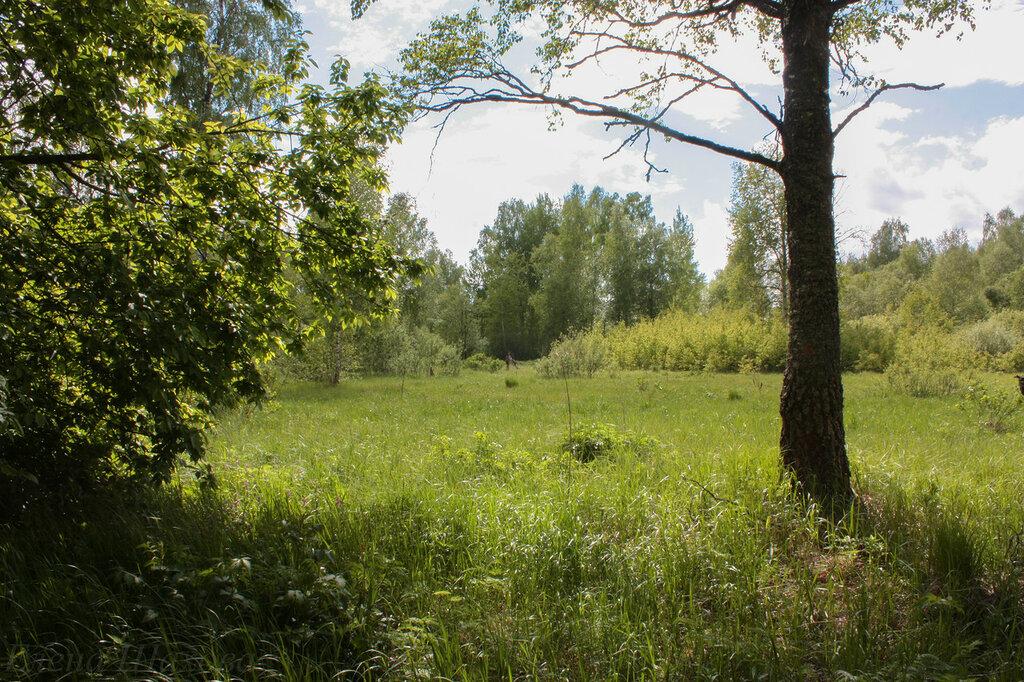 Лес-63.jpg