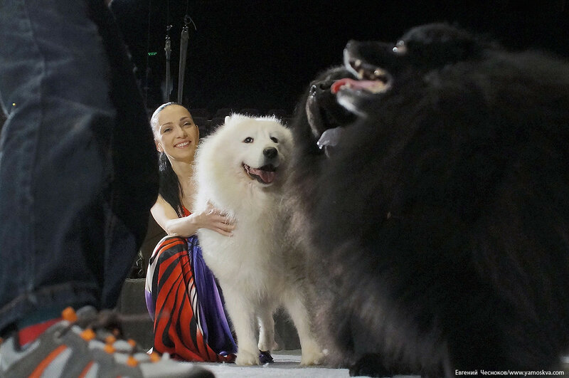 36. Дарья Костюк. собачки. 11.11.16.09..jpg