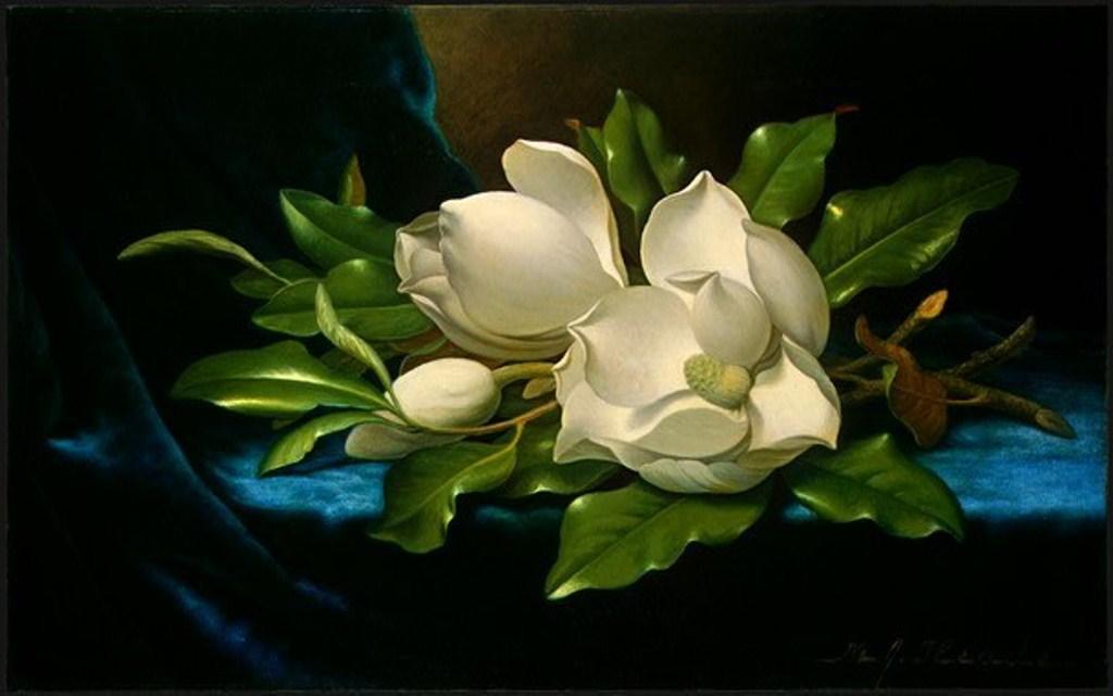 97149_magnoliya_na_golubom_barhate_1890.jpg