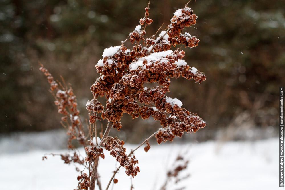 сухой куст растения под снегом