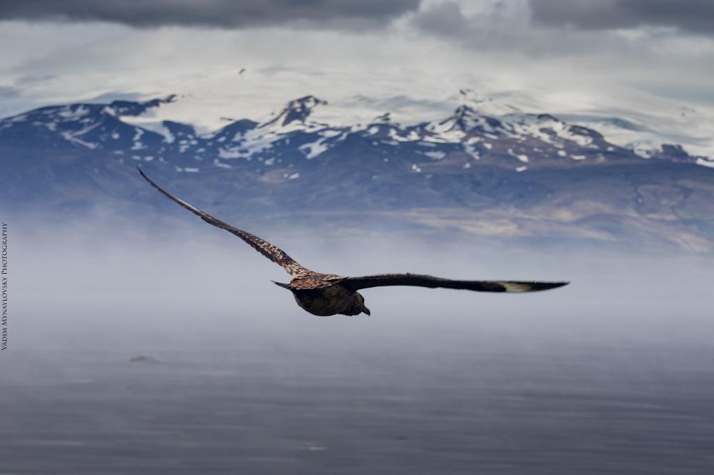 Исландия, ч. 9 - лагуна Йокульсаурлоун, мыс Инхольфсoвэди, ледник Эрайвайёкюдль, водопад Свартифосс