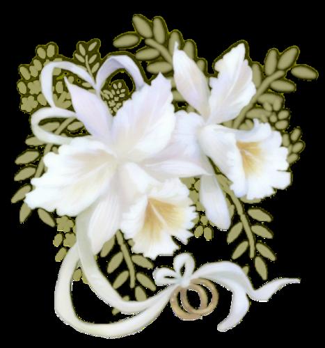 Белые ирисы