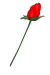 SSS_Roses_Element-7.png