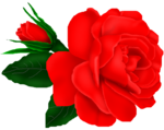 SSS_Roses_Element-15.png