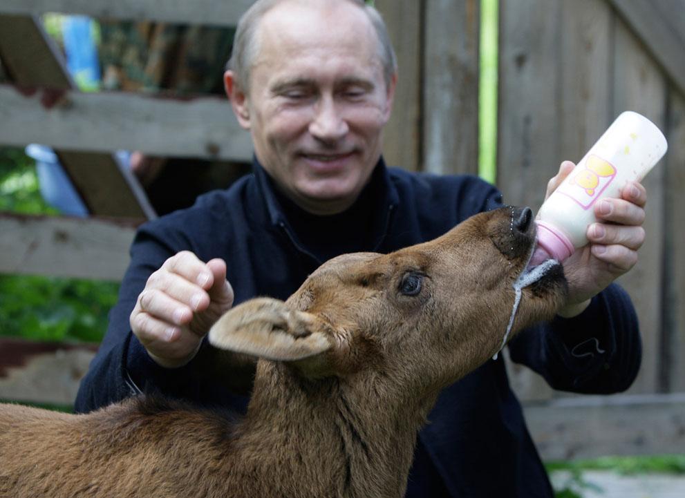 11. Путин и лосенок. Президент кормит лосенка в заповеднике «Лосиный остров» недалеко от Москвы, 5 и