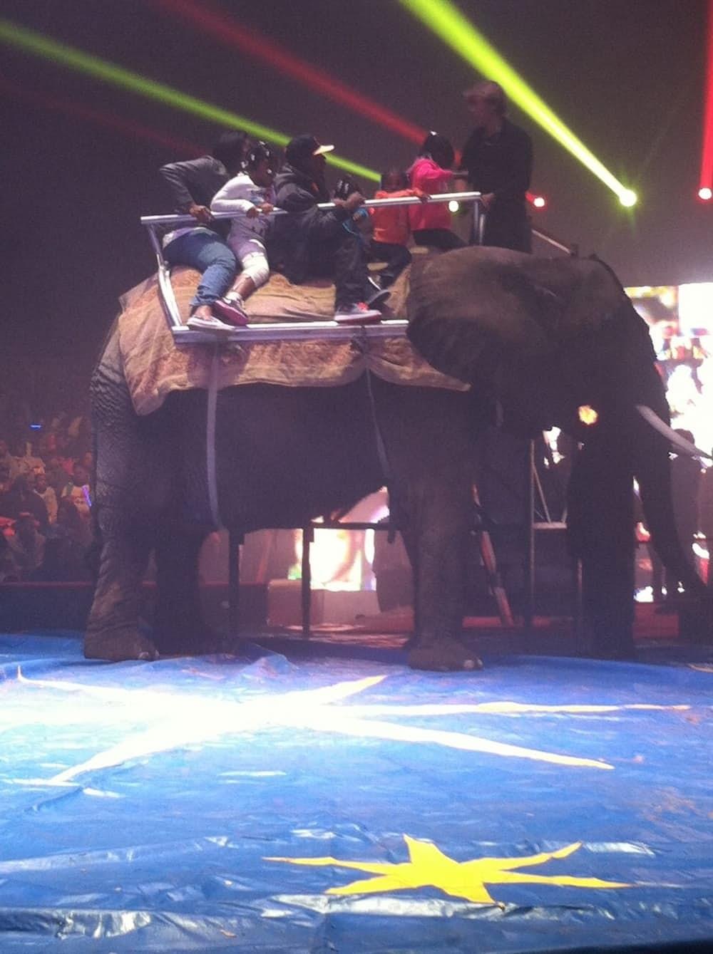 8. Животные живут как узники в тюрьме По некоторым оценкам, 90% жизни цирковых животных проходит за