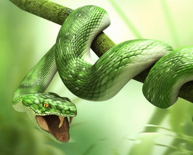 Змеи и их жертвы (11 фото)