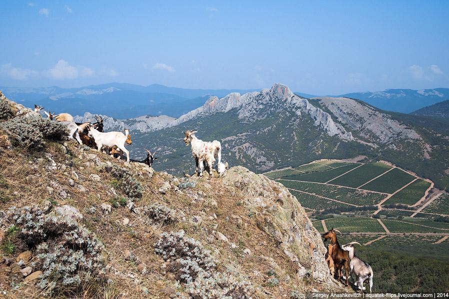 7. А внизу красота...Там, внизу, долина Айван-Тал, хребет Таракташ и скалы Сары-Кая: