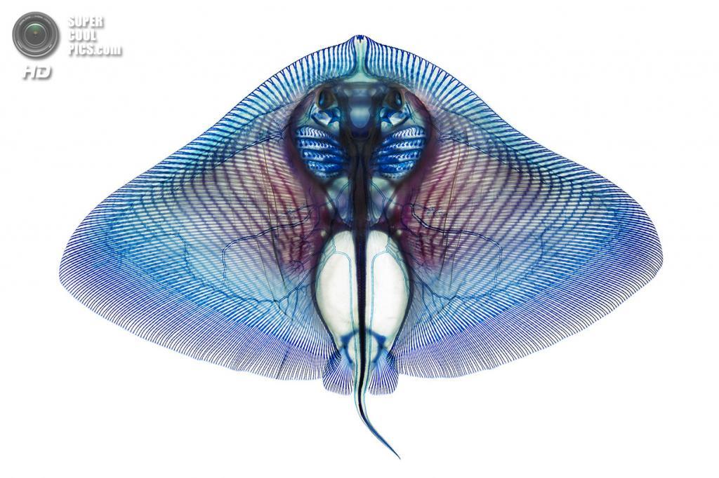 Водные животные на просвет (5 фото)